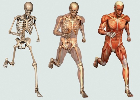 bone and muscle intro pic